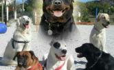Adiestramiento canino en grupos personalizados.