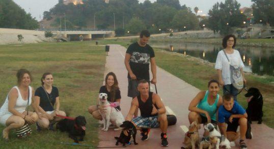 Adiestramiento Canino en grupo de Obediencia para todas las razas, Fuengirora, Benalmadena, Mijas y priovincia de Malaga