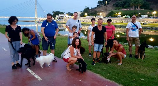 Adistramiento de perros, Fuengirola, Mijas, Benalmadena y toda la provincia de Malaga (6)