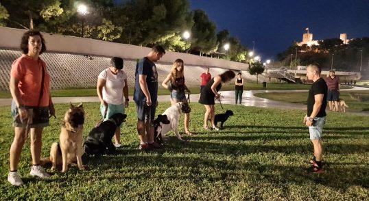 Adiestramiento canino en grupo para toda las razas y edades Fuengirola, Mijas- Benalmádena, Marbella y provincia de Málaga