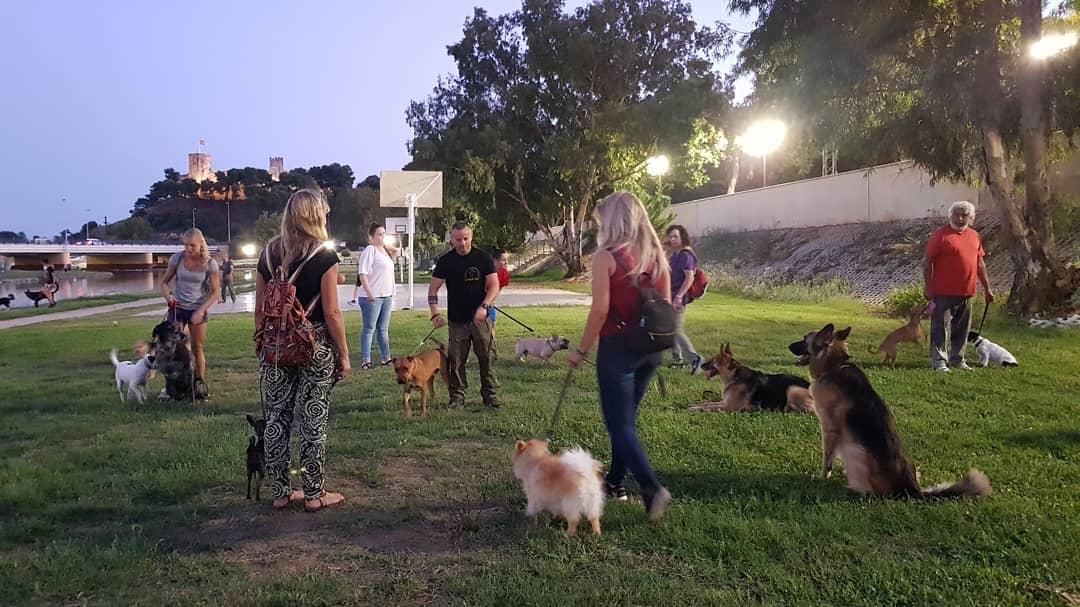 Adiestramiento canino Fuengirola, Malaga, Mijas, Benalmadena y provincia de Málaga