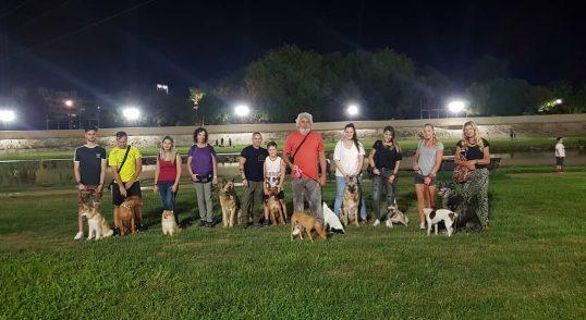 Adiestramiento canino en grupo, Fuengirola, Mijas, Benalmadena y provincia de Malaga