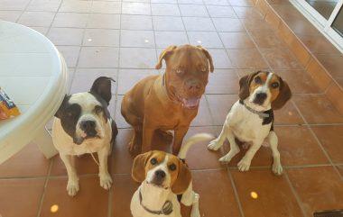 Residencia canina Kiara y adiestramiento canino Camacho