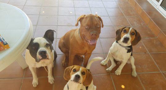 Adiestramiento canino Camacho todas las razas desde cachorros a adultos