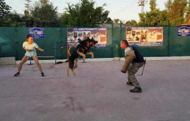 Adiestramiento de perros de guarda y Defensa.