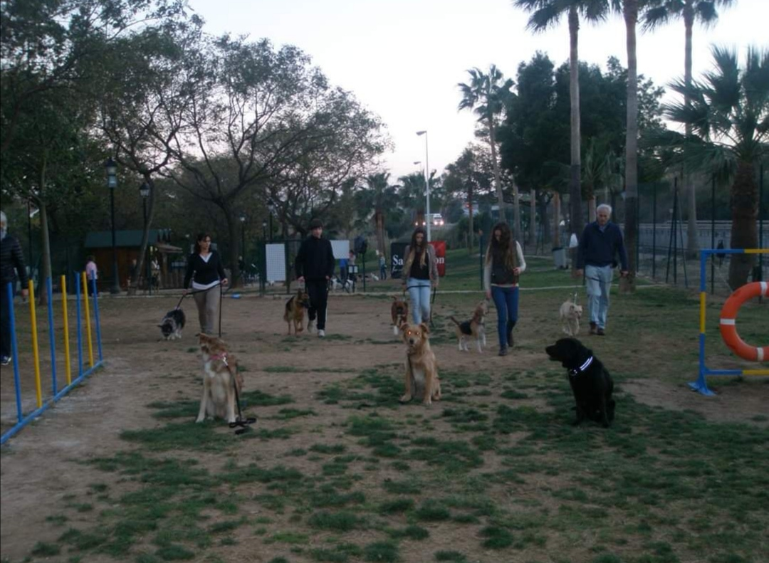📢📢¡ATENCIÓN! 📢📢Se abre el plazo para la inscripción de adiestramiento canino en grupo, donde se tratará obediencia básica, problemas de comportamiento, etc. Plazas limitadas. No dejes pasar esta ocasión para disfrutar de un perro equilibrado.🐾🐕🐶🐩🐺🦊 Para más información 671719636 📞para Fuengirola, Mijas, Benalmádena, Torremolinos y toda la provincia de Málaga.