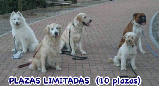 Adiestramiento canino Obediencia, Guarda y Protección. Educación canina, Problemas de comportamiento. Socialización con sus congéneres y seres humanos. Residencia canina, Torremolinos, Benalmádena, Fuengirola, Mijas, Marbella y toda la provincia de Málaga.