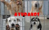 Adiestramiento canino, obediencia, guarda,defensa problema de comportamiento. Fuengirola, Mias, Benalmadena, Trremolinos, Marbella y toda la provincia de Málaga,