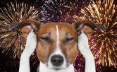 Adiestramiento canino de obediencia básica a domicilio para todas las razas y edades. Adiestramiento de modificación de conducta, ansiedad por separación, agresividad entre perros y/o seres humanos, etc. Adiestramiento de guarda, protección y defensa. Adiestramiento canino en residencia, obediencia básica, educación canina, problemas de comportamiento, modificación de conducta, perro para guarda y protección, etc. Adiestramiento canino en grupo de obediencia básica y problemas de conductas. Consultas a domicilio. Residencia canina. Adiestramiento canino para: Fuengirola, Mijas, Torremolinos, Benalmádena, Marbella y todo la provincia de Málaga.