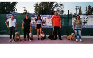 ¡¡¡Ya hemos comenzado!!! con las clases de adiestramiento canino en grupo del mes de Junio.