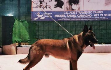 Los Perros que pasaron en el mes Junio 2020, por la escuela de Adiestramiento canino Camacho y Residencia canina Kiara.