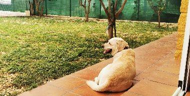 Perros de Adiestramiento en Residencia Kiara y grupo de obediencia básica del mes de julio-2020