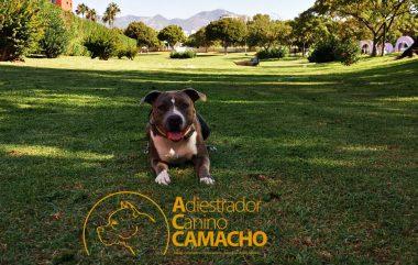 Adiestramiento canino Camacho perros de Adiestramiento del mes de agosto 2020.