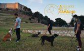Adiestramiento-canino-educaciòn-canina-adiestramiento-en-grupo-problemas-de-comportmiento-Fuengirola-Mijas-Benalmadena-Arroyo-de-la-miel-y-toda-la-provincia-de-Malaga