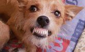 Adiestramiento canino, problemas de conductas, agresividad, terapeuta canino