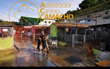 adiestramiento canino Camacho, perros del mes de septiembre 2020