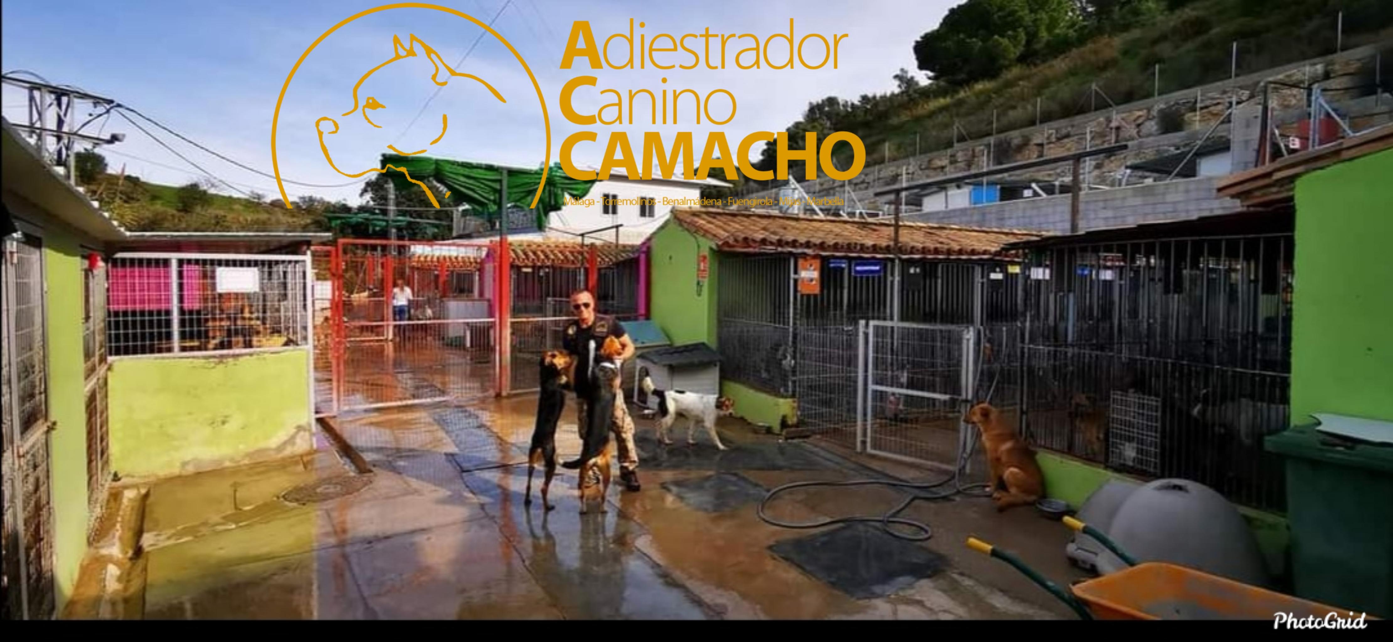 Asesor y Terapeuta en comportamiento canino.   Adiestramiento canino de obediencia básica a domicilio para todas las razas y edades.  Adiestramiento de modificación de conducta, ansiedad por separación, agresividad entre perros y/o seres humanos, etc.  Adiestramiento de guarda, protección y defensa.  Adiestramiento canino en residencia, obediencia básica, educación canina, problemas de comportamiento, modificación de conducta, perro para guarda y protección, etc.  Adiestramiento canino en grupo de obediencia básica y problemas de comportamiento.  Consultas a domicilio.  Residencia canina.  Adiestramiento canino para: Fuengirola, Mijas, Torremolinos, Benalmádena, Marbella y todo la provincia de Málaga.   Para más información y referencias sobre nosotros puedes visitar nuestra página web:Www.adiestrarperrosmalaga.com   FACEBOOK : Adiestrador Canino Camacho Instagram: Camacho_Adiestrador Para más información llamar al móvil: 671-71-96-36
