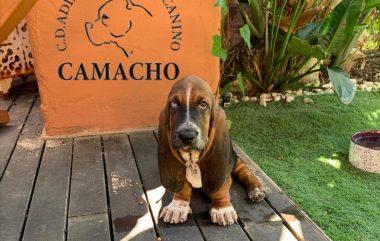 Fotos de adiestramiento canino, grupos, consultas a domicilio y senderismo del mes de octubre 2020.