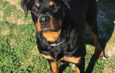 Perros de adiestramientos y consultas del mes de Noviembre 2020
