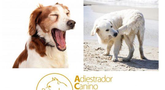 Asesor y terapeuta en comportamiento canino. Adiestramiento canino de obediencia básica a domicilio para todas las razas y edades. Adiestramiento de modificación de conducta, ansiedad por separación, agresividad entre perros y/o seres humanos, etc. Adiestramiento de guarda, protección y defensa. Adiestramiento canino en residencia, obediencia básica, educación canina, problemas de comportamiento, modificación de conducta, perro para guarda y protección, etc. Adiestramiento canino en grupo de obediencia básica y problemas de conductas. Consultas a domicilio. Residencia canina. Adiestramiento canino para: Fuengirola, Mijas, Torremolinos, Benalmádena, Marbella y todo la provincia de Málaga.