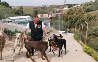 Perros de Adiestramiento, consultas, protectora de animales y rehabilitación del mes de Marzo.