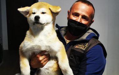 Perros de consultas a domicilio y Adiestramiento canino del mes de Abril. 🐺🐾
